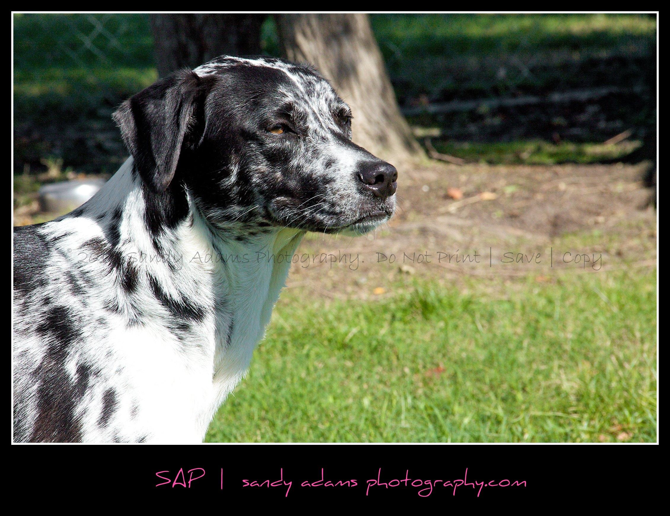 Aussie Roo + Sadie Blue… sisters at heart!   Houston Pet ...  Pearland