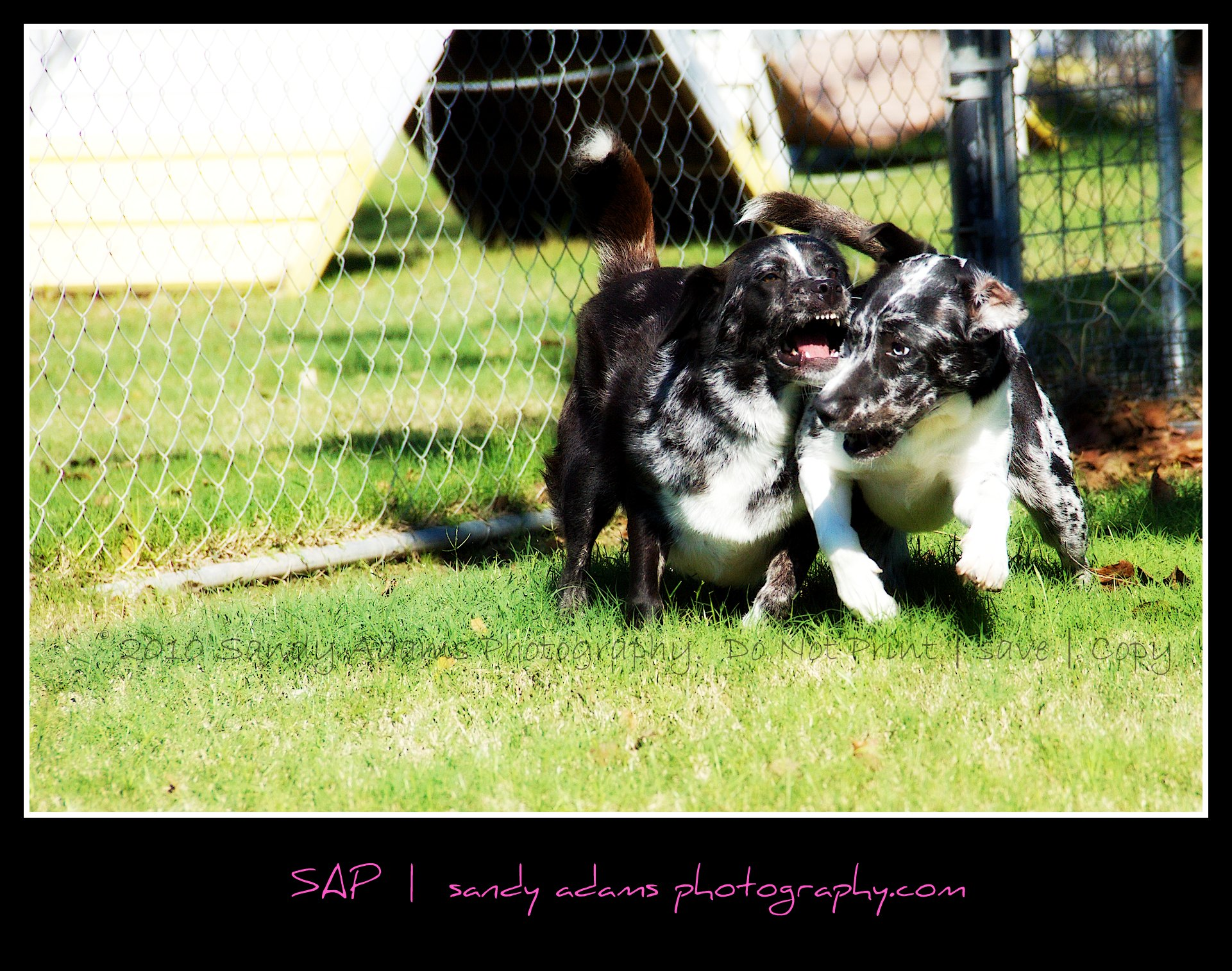 Dog Kennels Pearland Texas