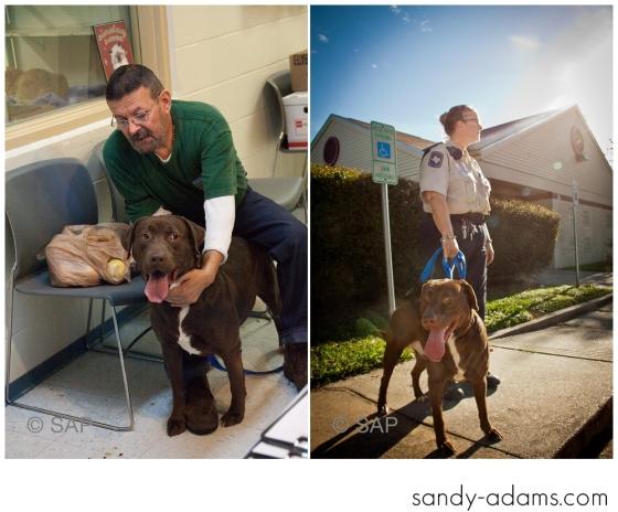 Sandy Adams Photography The Pet Palace League City Animal Shelter-7543