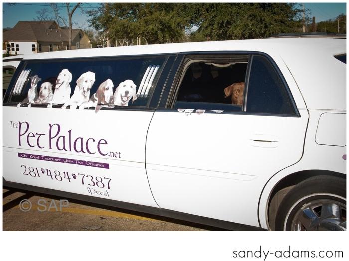 Sandy Adams Photography The Pet Palace League City Animal Shelter-7652