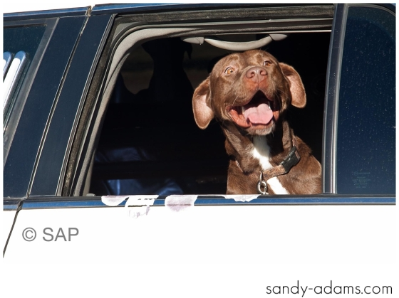 Sandy Adams Photography The Pet Palace League City Animal Shelter-7654