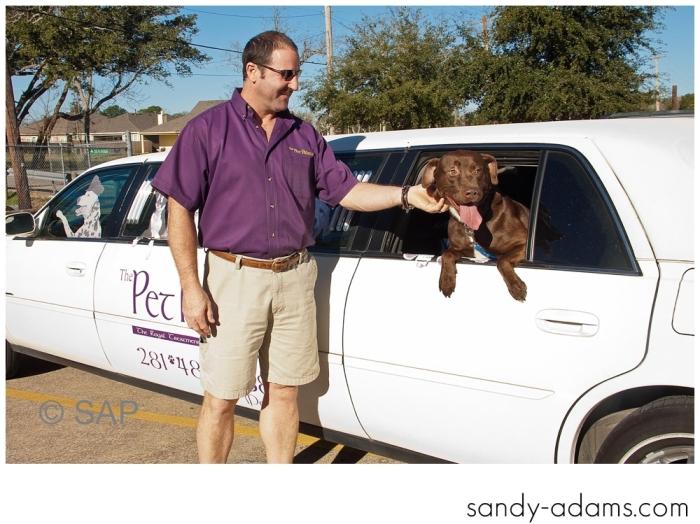 Sandy Adams Photography The Pet Palace League City Animal Shelter-7666