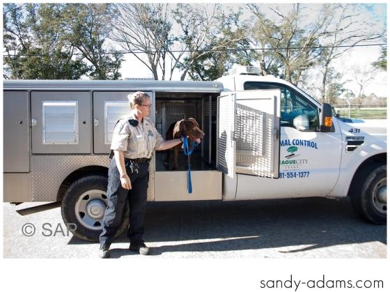 Sandy Adams Photography The Pet Palace League City Animal Shelter-7696
