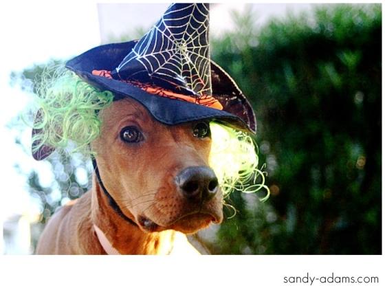 Sandy Adams Photography Halloween Houston Editorial Photographer-4-2