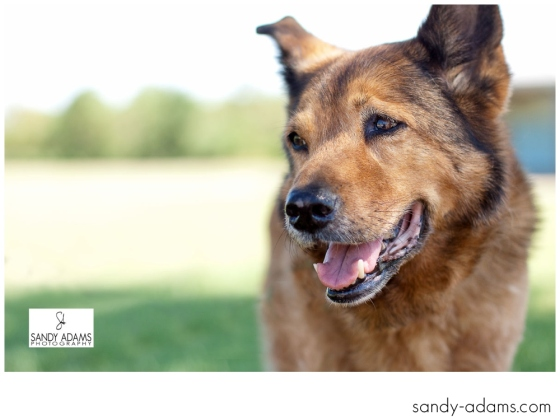Sandy Adams Photography Smile for A cure Dude Houston Pet Photographer-44
