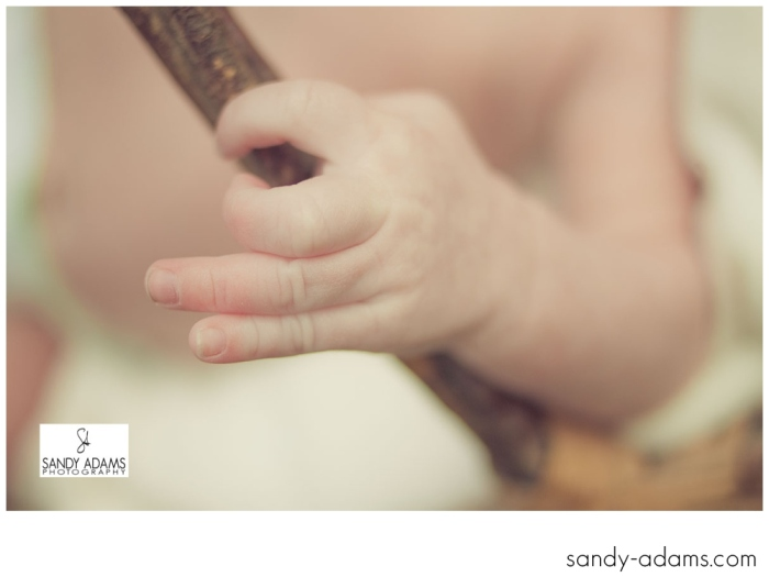 Sandy Adams Photography Houston Newborn Photographer-2