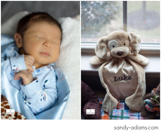 Sandy Adams Photography Houston League City Newborn Photographer-4