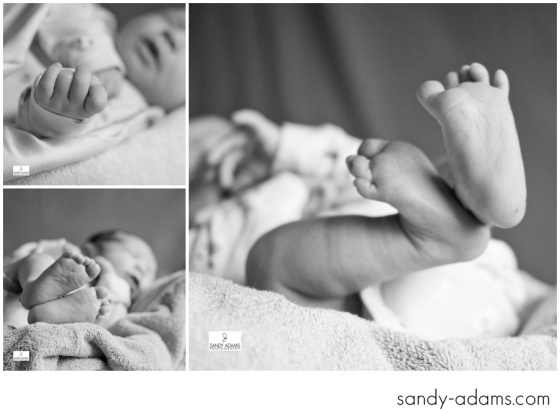Sandy Adams Photography Houston League City Newborn Photographer-4706