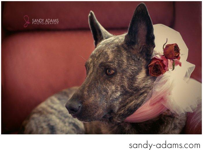 Sandy Adams Photography Houston Pet Portraits League City Pet Photographer-13