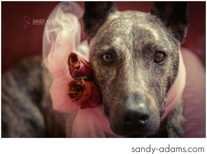 Sandy Adams Photography Houston Pet Portraits League City Pet Photographer-17