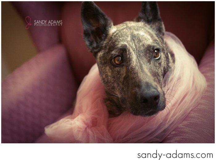 Sandy Adams Photography Houston Pet Portraits League City Pet Photographer-18