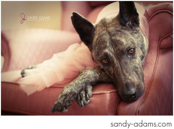 Sandy Adams Photography Houston Pet Portraits League City Pet Photographer-20