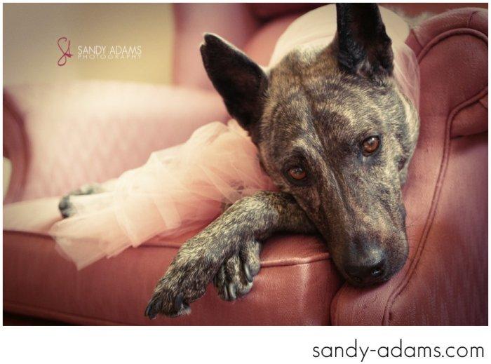 Sandy Adams Photography Houston Pet Portraits League City Pet Photographer-20