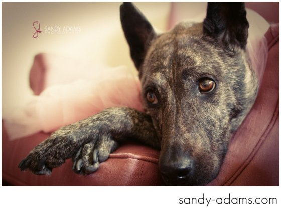 Sandy Adams Photography Houston Pet Portraits League City Pet Photographer-21