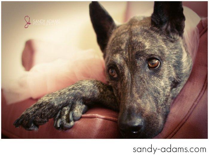 Sandy Adams Photography Houston Pet Portraits League City Pet Photographer-21
