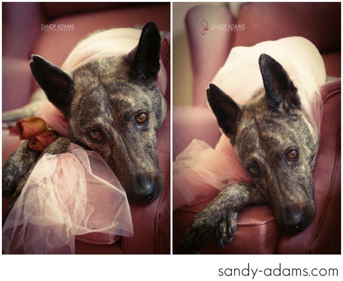 Sandy Adams Photography Houston Pet Portraits League City Pet Photographer-22