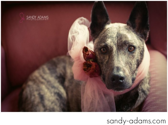 Sandy Adams Photography Houston Pet Portraits League City Pet Photographer-8