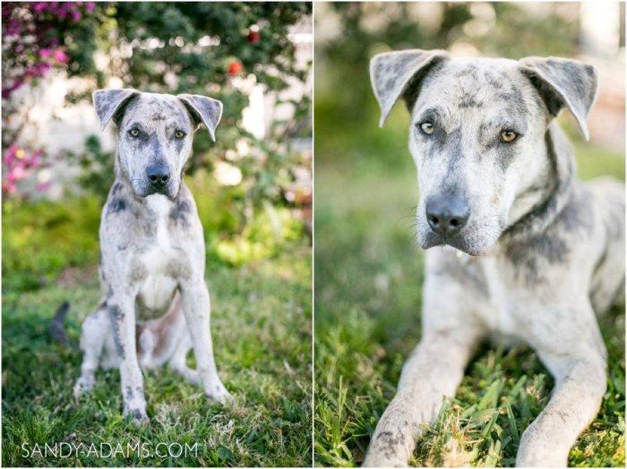 League City Friendswood Portrait Photographer Dog Photographer Sandy Adams Photography-1