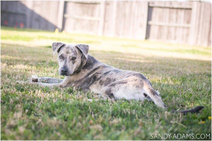 League City Friendswood Portrait Photographer Dog Photographer Sandy Adams Photography-11