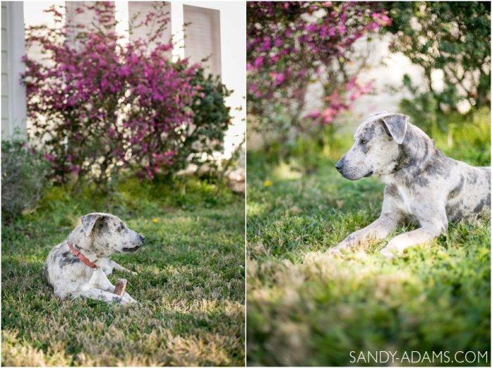 League City Friendswood Portrait Photographer Dog Photographer Sandy Adams Photography-12