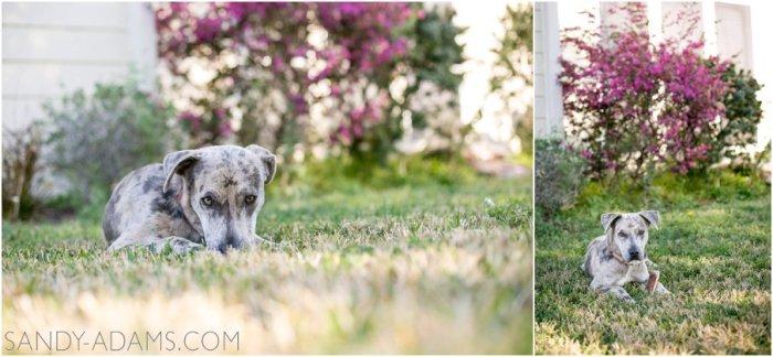 League City Friendswood Portrait Photographer Dog Photographer Sandy Adams Photography-14