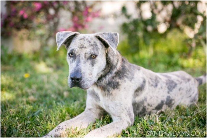 League City Friendswood Portrait Photographer Dog Photographer Sandy Adams Photography-2