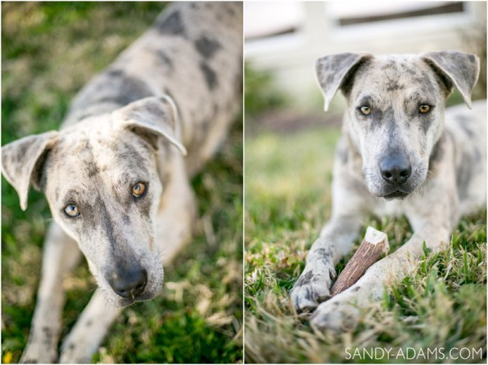 League City Friendswood Portrait Photographer Dog Photographer Sandy Adams Photography-5