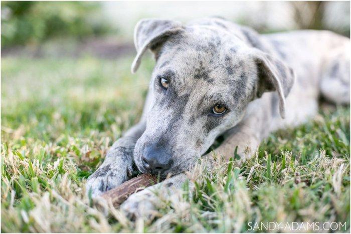 League City Friendswood Portrait Photographer Dog Photographer Sandy Adams Photography-9