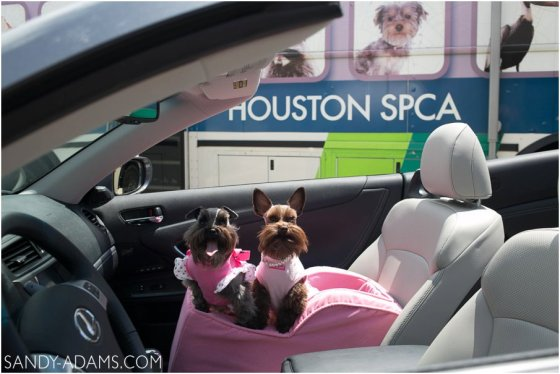League CIty Friendswood Lexus Clear Lake HSPCA Pet Palace Doody Calls Portrait Sandy Adams Photography-1