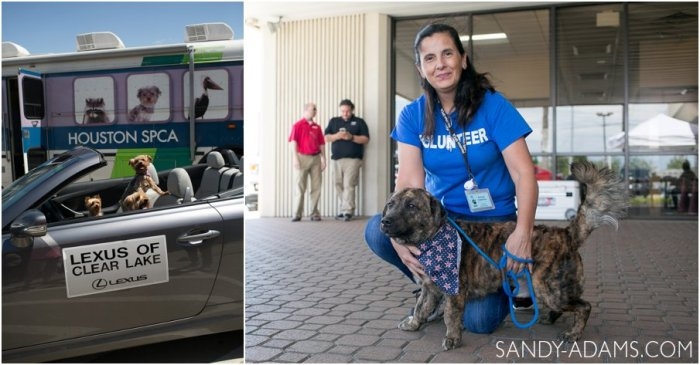 League CIty Friendswood Lexus Clear Lake HSPCA Pet Palace Doody Calls Portrait Sandy Adams Photography-18