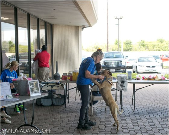 League CIty Friendswood Lexus Clear Lake HSPCA Pet Palace Doody Calls Portrait Sandy Adams Photography-21