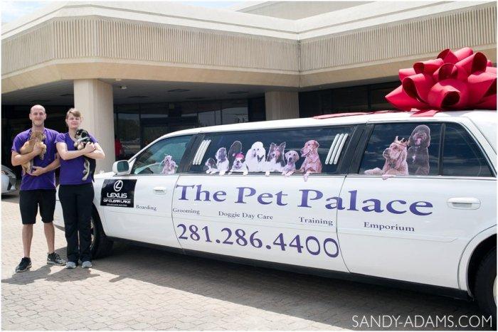 League CIty Friendswood Lexus Clear Lake HSPCA Pet Palace Doody Calls Portrait Sandy Adams Photography-5